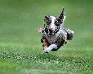 animales-tiernos-19 Trucos para los perros nerviosos Trucos para los perros nerviosos animales tiernos 19