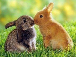 conejos Alimentación del conejo Alimentación del conejo conejos