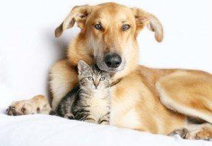 convivencia-perros-y-gatos Cómo combatir la alergia a las mascotas Cómo combatir la alergia a las mascotas convivencia perros y gatos
