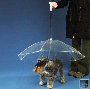 perro-sombrilla pretege a tu perro de la lluvia Pretege a tu perro de la lluvia perro sombrilla
