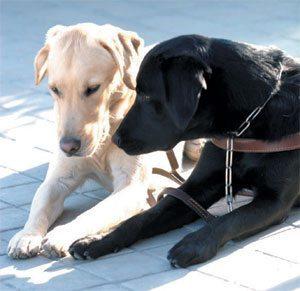 """perro2 Un estudio concluye que los perros """"pueden ser optimistas y pesimistas"""" Un estudio concluye que los perros """"pueden ser optimistas y pesimistas"""" perro2"""