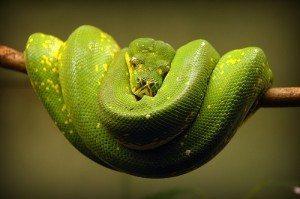 serpiente ¿Cómo se mueven las serpientes? ¿Cómo se mueven las serpientes? serpiente