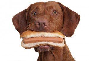 PERRO-COMIENDO-PERRITO-WAKUBLOG-WAKUPLANET 10 alimentos prohibidos para los perros 10 alimentos prohibidos para los perros PERRO COMIENDO PERRITO WAKUBLOG WAKUPLANET