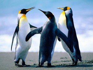 Penguins1 Alimentación del pingüino Alimentación del pingüino Penguins1
