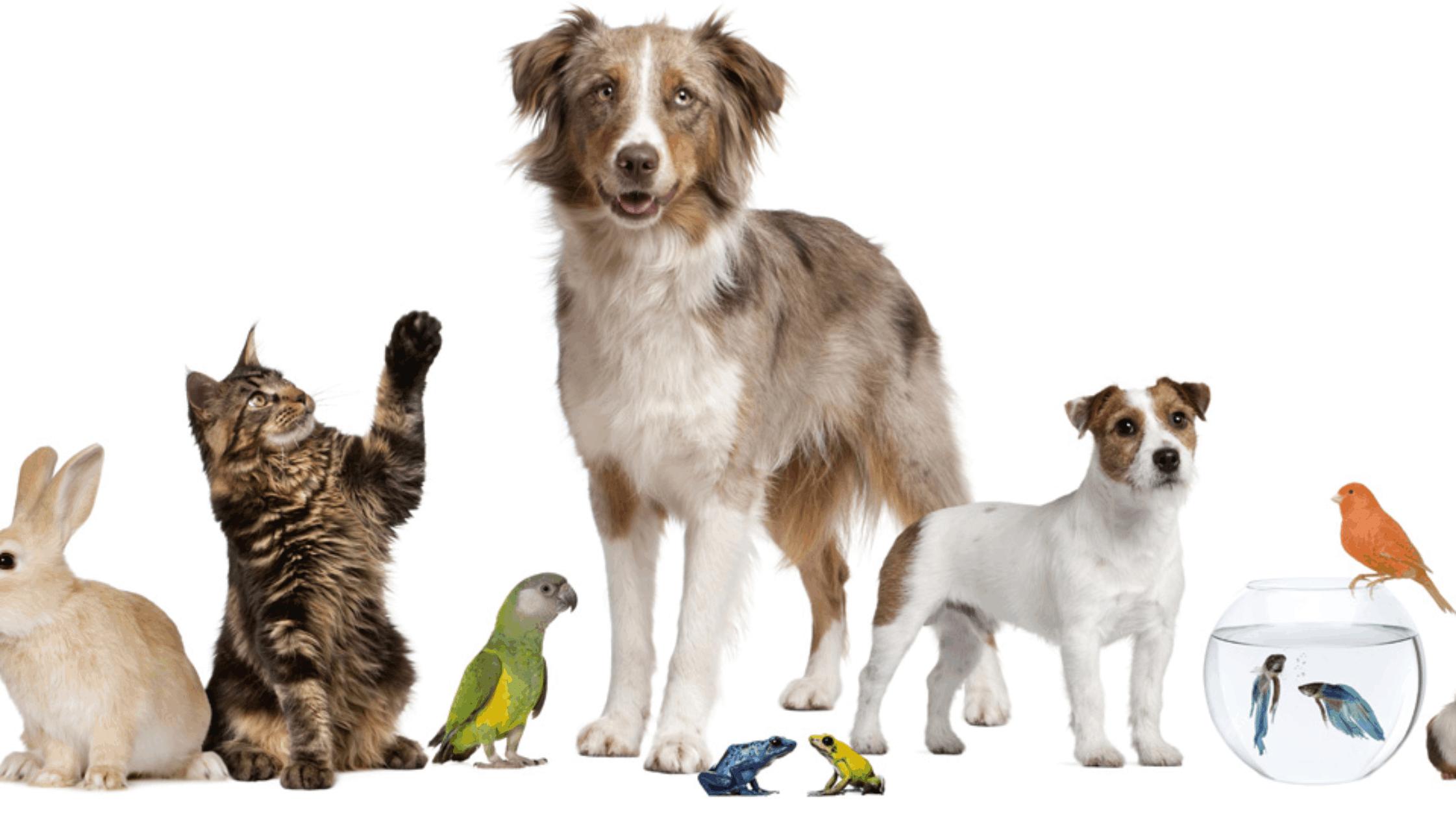 mascotas Pros y contras de tener una mascota Pros y contras de tener una mascota mascotas 1