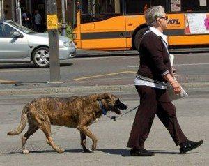 paseando-a-mi-perro 5 consejos para los paseos con nuestro perro 5 consejos para los paseos con nuestro perro paseando a mi perro