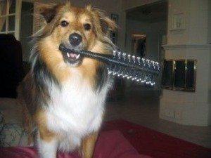 perro-cepillo.art_ Beneficios que obtiene un perro cuando lo cepillas Beneficios que obtiene un perro cuando lo cepillas perro cepillo