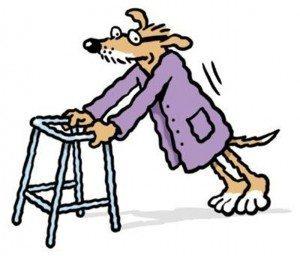 perroviejo Cómo calcular la edad del perro en años humanos. Cómo calcular la edad del perro en años humanos perroviejo