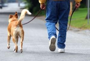 sin tensión Cosas divertidas que puedes hacer con tu perro Cosas divertidas que puedes hacer con tu perro sin tensi  n
