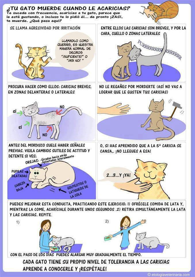 8132634 Mi gato me muerde cuando le acaricio, ¿por qué? Mi gato me muerde cuando le acaricio, ¿por qué? 8132634