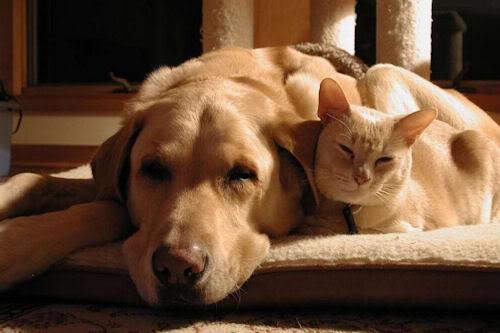 Convivencia perro y gato ¿Cómo elegir la mascota que más me conviene? ¿Cómo elegir la mascota que más me conviene? Convivencia perro y gato