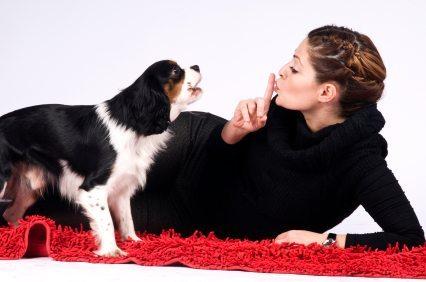 Perro-ladrador 10 razones por las que tu perro no te hace caso. 10 razones por las que tu perro no te hace caso Perro ladrador