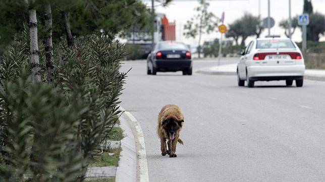 abandono-perro--644x362 Los consejos que necesitas para que tu perro no sea atropellado. Los consejos que necesitas para que tu perro no sea atropellado. abandono perro