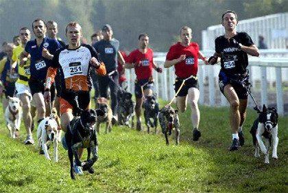 canicross El canicross, un deporte al aire libre con tu perro El canicross, un deporte al aire libre con tu perro canicross