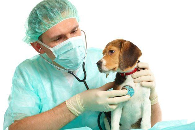 como-hacer-que-mi-perro-pierda-el-miedo-al-veterinario1 La primara vez en el veterinario. La primara vez en el veterinario como hacer que mi perro pierda el miedo al veterinario1