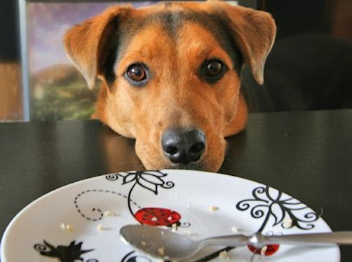 img_como_evitar_que_mi_perro_pida_comida_cuando_estoy_comiendo_23860_orig Cómo evitar que un perro pida comida cuando alguien está comiendo. Cómo evitar que un perro pida comida cuando alguien está comiendo img como evitar que mi perro pida comida cuando estoy comiendo 23860 orig