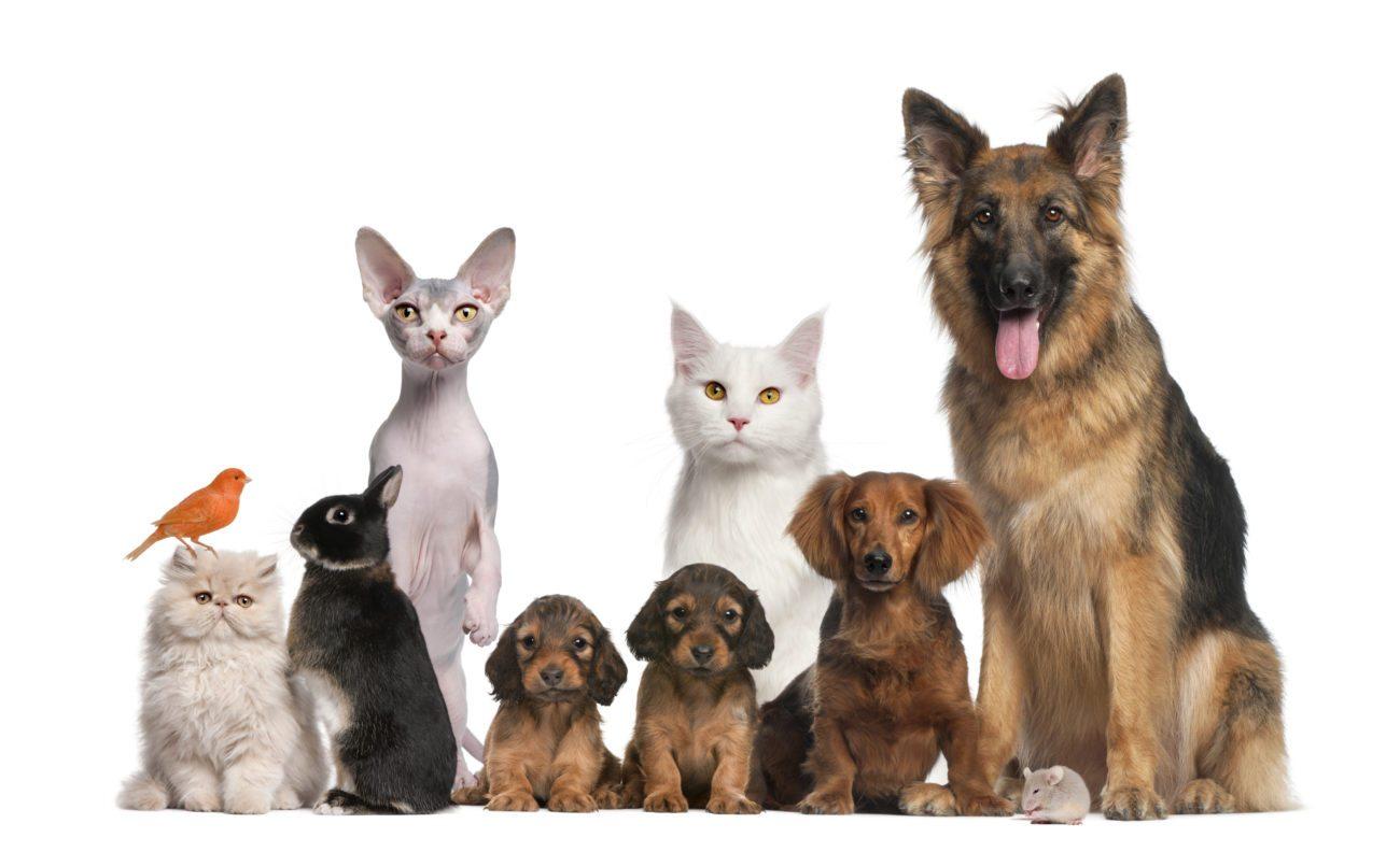 mal-olor-mascotas El mal olor de las mascotas. El mal olor de las mascotas mal olor mascotas