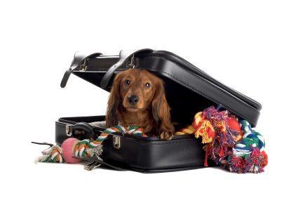 perro-dentro-de-una-maleta Viajar con el perro, cosas a tener en cuenta. Viajar con el perro, cosas a tener en cuenta. perro dentro de una maleta