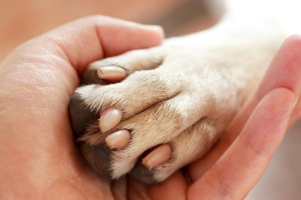 perro_pata Cosas que no sabías de las patas de tu perro Cosas que no sabías de las patas de tu perro perro pata