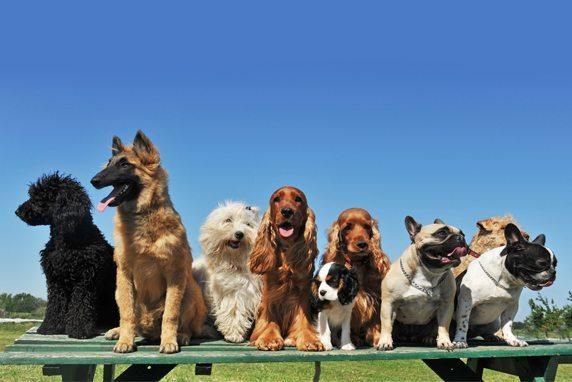 perrosjuntos 12 curiosidades sobre perros que seguro que no sabías 12 curiosidades sobre perros que seguro que no sabías perrosjuntos