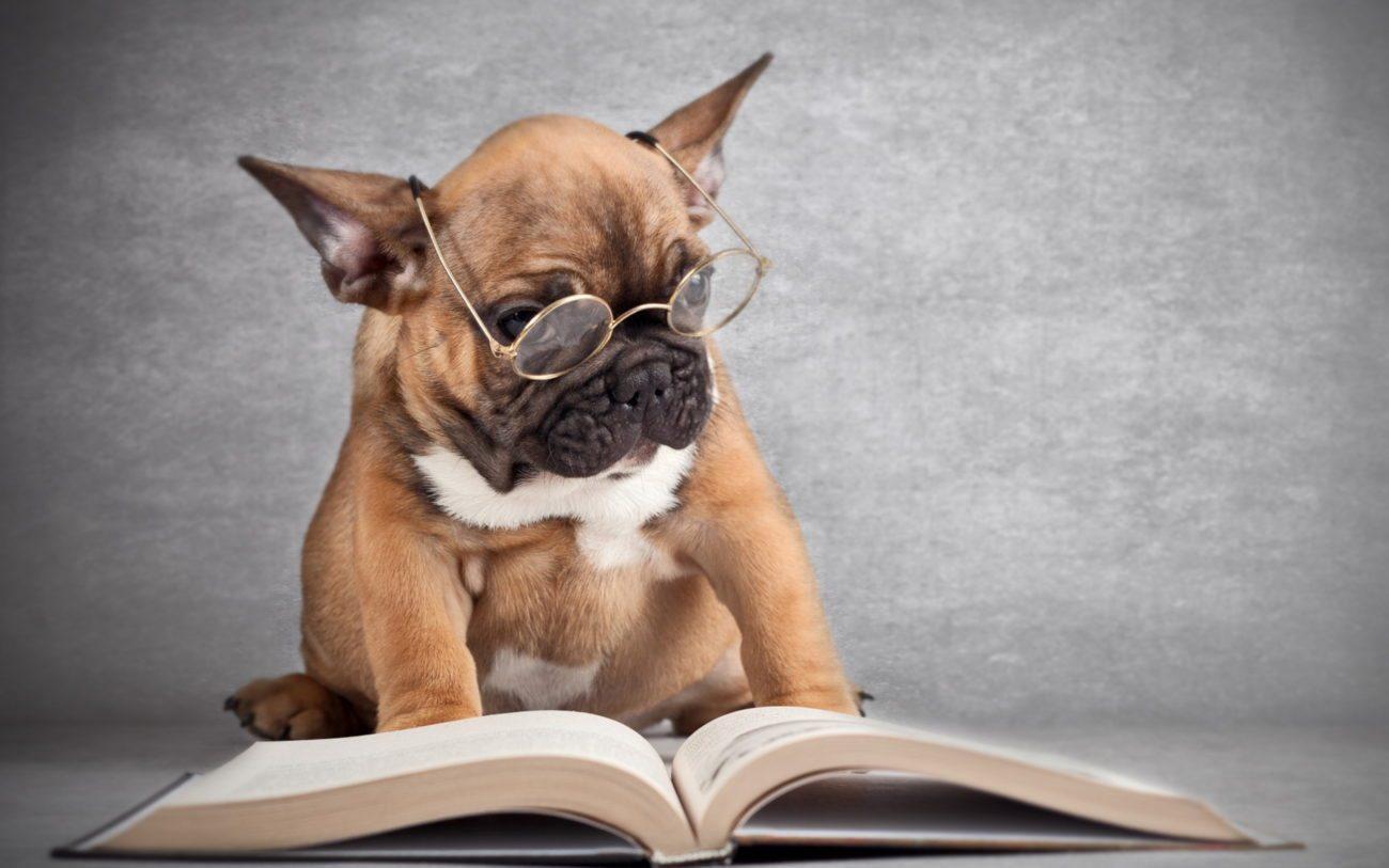 words Juegos de inteligencia para perros. Juegos de inteligencia para perros words