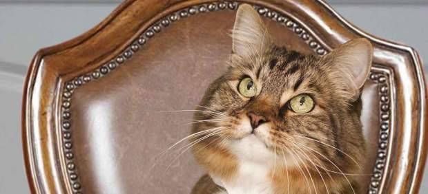 155174-620-282 La edad del gato La edad del gato 155174 620 282