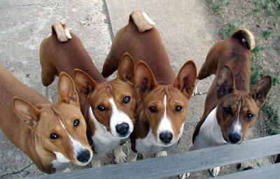 2003-392-L Perros que no ladran Perros que no ladran 2003 392 L