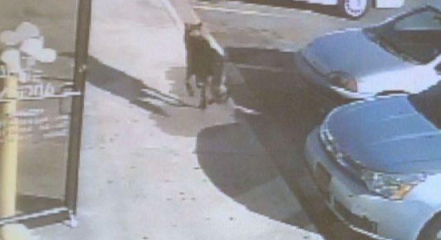31 (3) Un perro muere tiroteado protegiendo con su cuerpo a su dueña y su hijo Un perro muere tiroteado protegiendo con su cuerpo a su dueña y su hijo 31 3