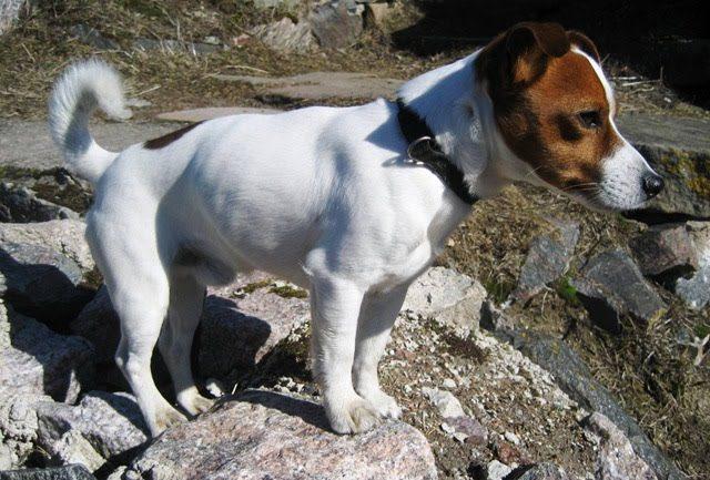 4 Por qué los perros rascan el suelo despues de hacer sus necesidades Por qué los perros rascan el suelo despues de hacer sus necesidades 4