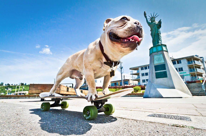 actividades-exterior-bulldog-frances-jugar-monopatin Mi perro ladra a las bicicletas y monopatines Mi perro ladra a las bicicletas y monopatines actividades exterior bulldog frances jugar monopatin
