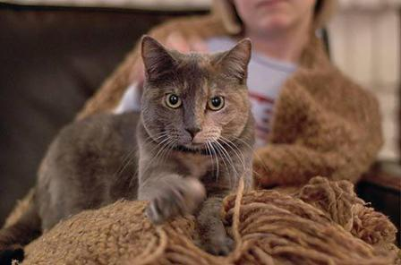 rodilla ¿Por qué los gatos amasan? ¿Por qué los gatos amasan? rodilla