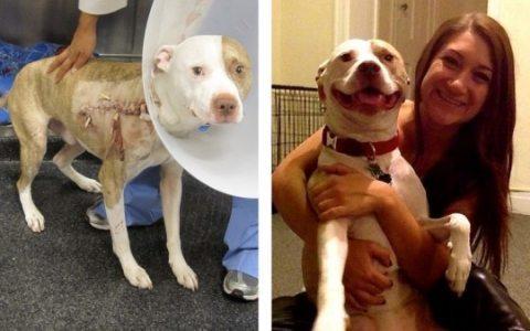 35 Perros, el antes y el después de pasar por la perrera Perros, el antes y el después de pasar por la perrera 35