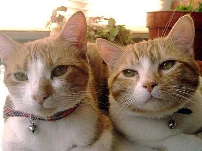 412_79226_2385766_787397 ¿Por qué no es una buena idea poner un cascabel a tu gato? ¿Por qué no es una buena idea poner un cascabel a tu gato? 412 79226 2385766 787397