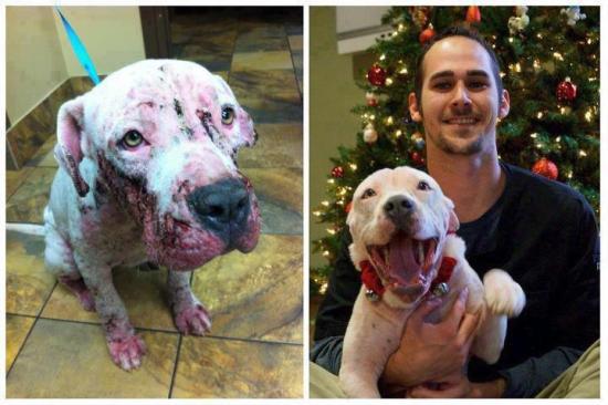 42_antes_despues Perros, el antes y el después de pasar por la perrera Perros, el antes y el después de pasar por la perrera 42 antes despues
