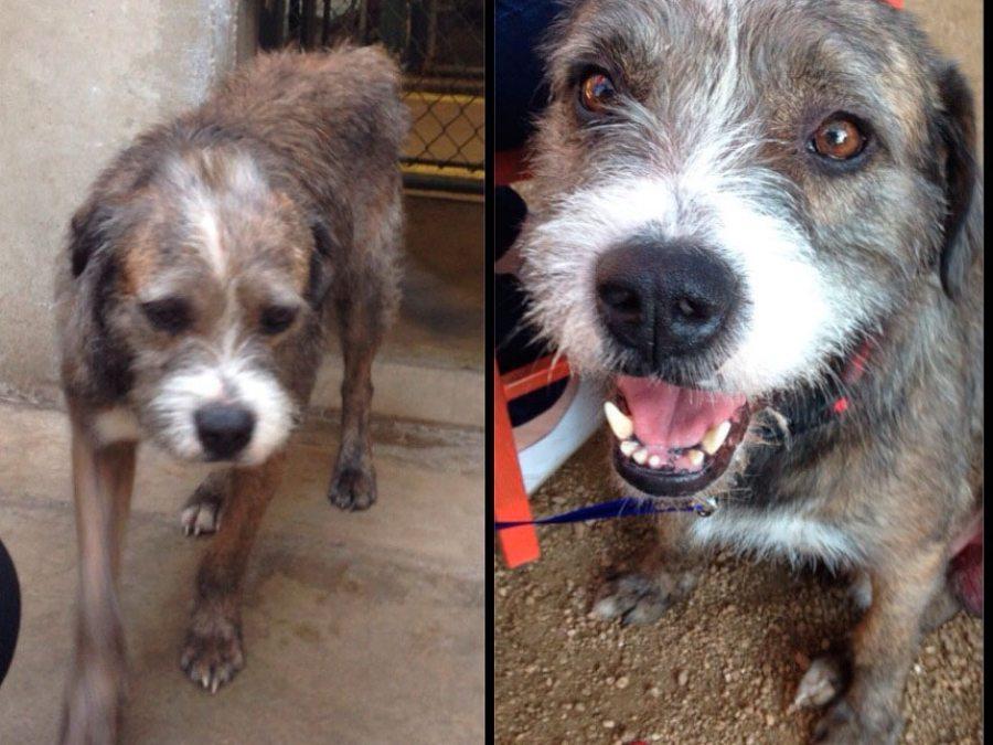 45 (2) Perros, el antes y el después de pasar por la perrera Perros, el antes y el después de pasar por la perrera 45 2