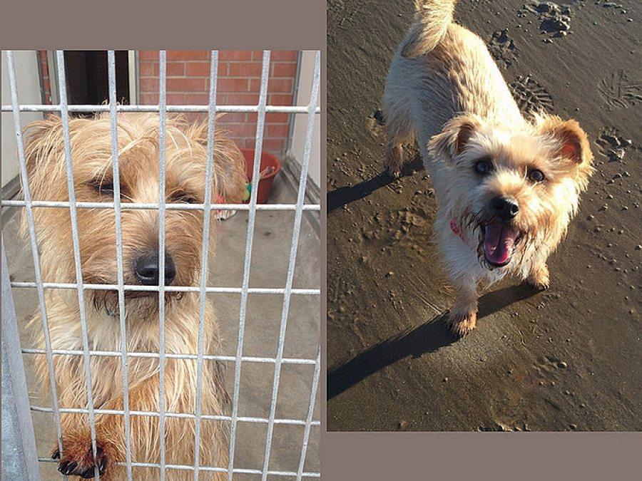 45 Perros, el antes y el después de pasar por la perrera Perros, el antes y el después de pasar por la perrera 45
