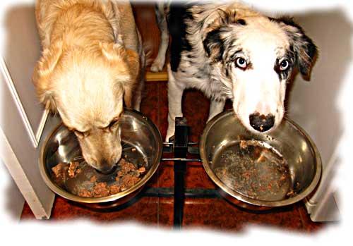 Agresividad-comida Bancos de alimentos para mascotas Bancos de alimentos para mascotas Agresividad comida