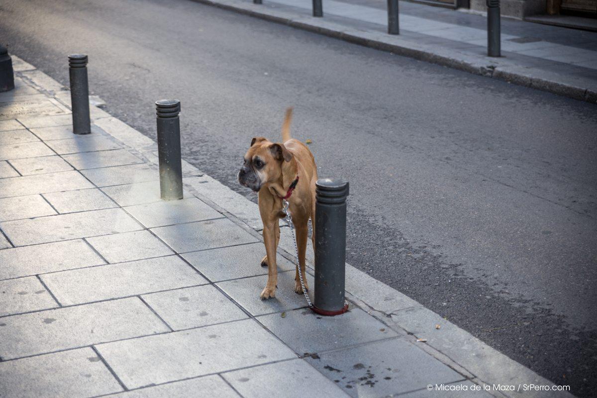 DogsWait-Dec13 Por qué no dejar nunca un perro atado fuera cuando vamos a comprar Por qué no dejar nunca un perro atado fuera cuando vamos a comprar DogsWait Dec13