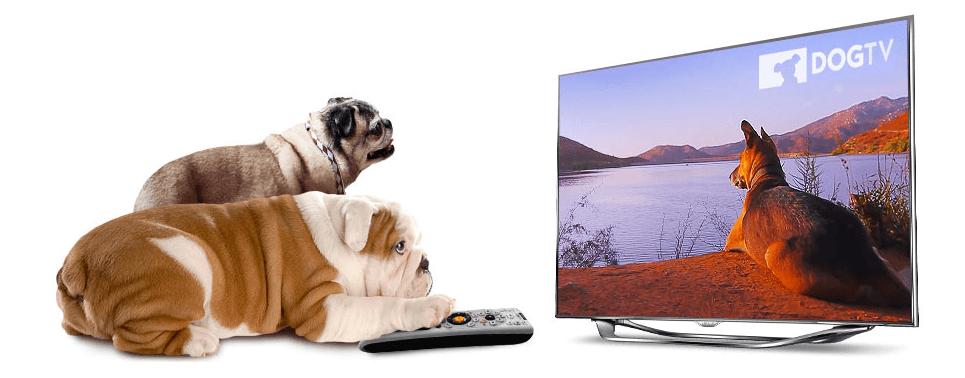 Dogtv Una televisión solo para perros Una televisión solo para perros Dogtv