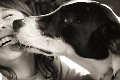 besos-de-perro ¿Los perros se ponen celosos? ¿Los perros se ponen celosos? besos de perro