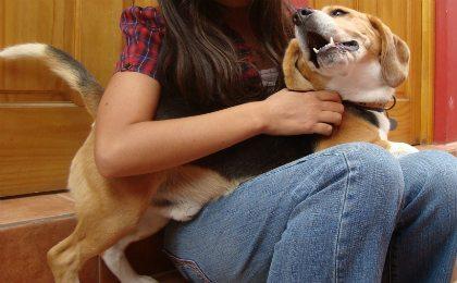 reencuentro1 Los perros y las conductas para llamar la atención Los perros y las conductas para llamar la atención reencuentro1