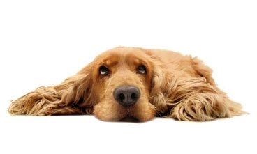 Trucos-para-entretener-tu-mascota-aburrida-dentro-de-casa Mi perro se aburre Mi perro se aburre Trucos para entretener tu mascota aburrida dentro de casa