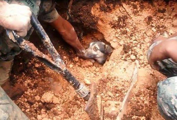 can alud Rescate de un perro que estuvo 18 horas bajo tierra Rescate de un perro que estuvo 18 horas bajo tierra can alud