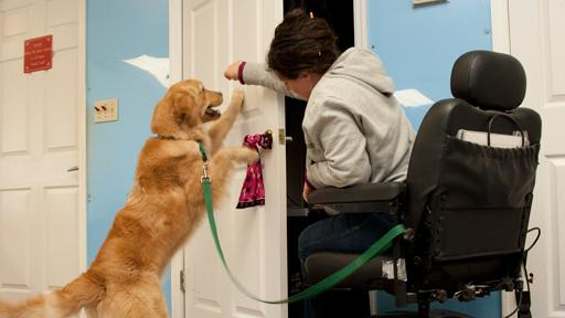 d3B_7208 La Comunidad de Madrid permitirá que los perros de asistencia puedan entrar en lugares públicos La Comunidad de Madrid permitirá que los perros de asistencia puedan entrar en lugares públicos d3B 7208