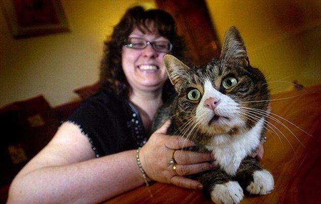 gato-se-traga-diamantes El gato: ¡Nos comprenden! El gato: ¡Nos comprenden! gato se traga diamantes