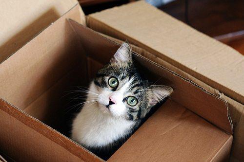 image EL GATO: CÓMO ACTUAR CUANDO TENEMOS MUDANZA EN CASA El gato: Cómo actuar cuando tenemos mudanza en casa image