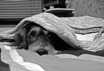 perro-con-miedo Los perros y las tormentas Los perros y las tormentas perro con miedo