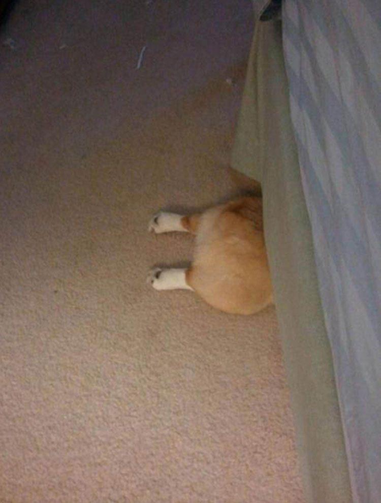 perros-escondidos Perros que se esconden cuando saben que han hecho algo mal Perros que se esconden cuando saben que han hecho algo mal perros escondidos