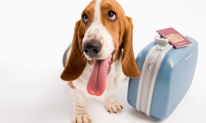 viajar-mascotas1 10 consejos útiles por si nos vamos de vacaciones con nuestro perro 10 consejos útiles por si nos vamos de vacaciones con nuestro perro viajar mascotas1