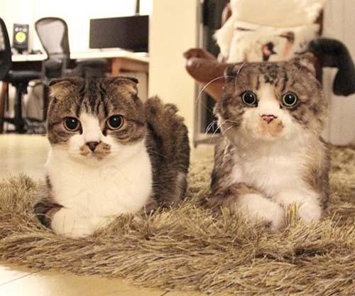 10298606 Animales y peluches idénticos Animales y peluches idénticos 10298606